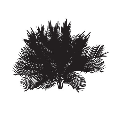 Cycas silhouette illustration.