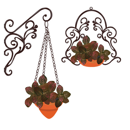 Fittonia with red leaves in decorative cachepots and a pot, the color vector image on a white background Illustration
