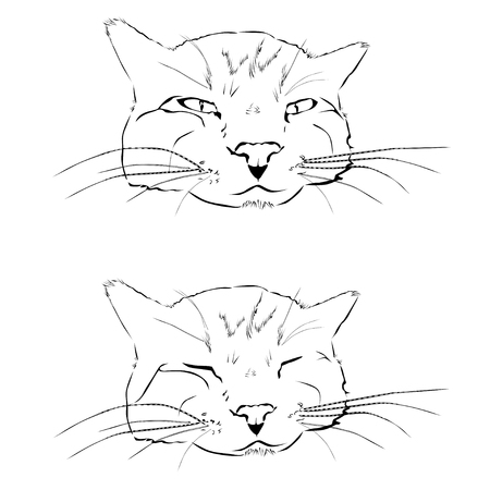 The quiet and sleeping cat, the black vector image on a white background