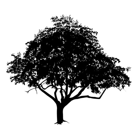 Tree silhouette with leaves in the summer, the black-and-white vector image Illustration