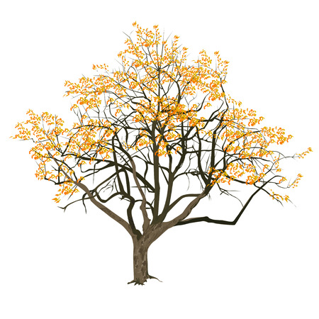 Tree with yellow leaves in the fall, the color vector image on a white background