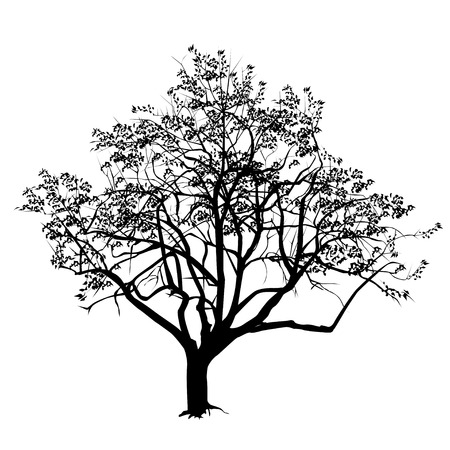Tree silhouette with the flown leaves in the fall, the black-and-white vector image