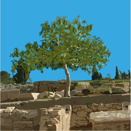 Fig tree (Ficus carica L.) in the summer on ancient ruins, the color vector image Illustration