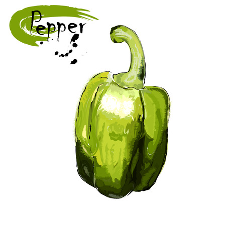 Fruit of green sweet pepper, stylization of a watercolor, the color vector drawing on a white background with an inscription Illustration