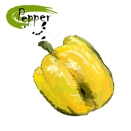 Fruit of yellow sweet pepper, stylization of a watercolor, the color vector drawing on a white background with an inscription