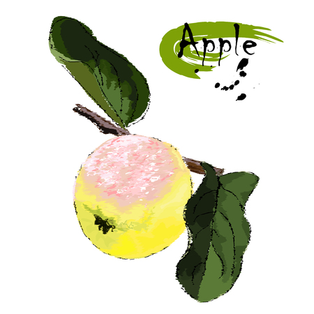 Ripe apple on a tree branch with leaves, stylization of a watercolor, the color vector drawing on a white background with an inscription Illustration