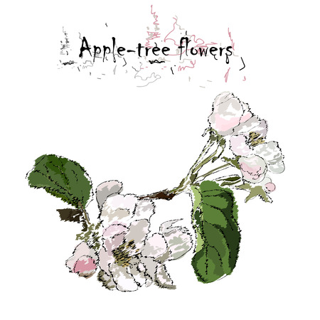 Apple-tree flowers on a branch with leaves, stylization of a watercolor, the color vector drawing on a white background with an inscription