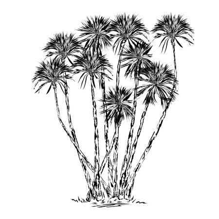 Yucca, several trunks, the black vector drawing on a white background Çizim