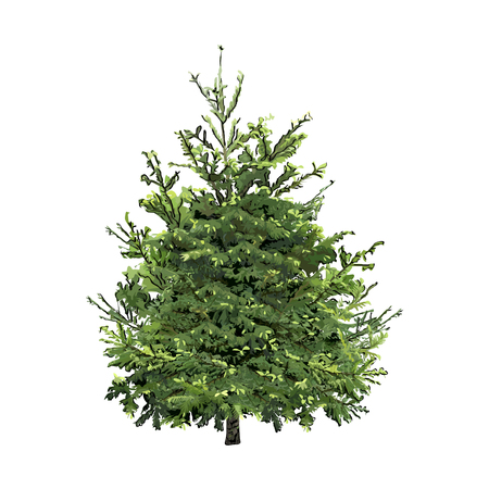 Fir-tree with young spring green escapes, the color vector image on a white background