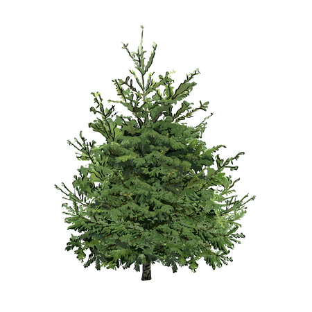 Fir-tree with green needles, the color vector image on a white background 向量圖像