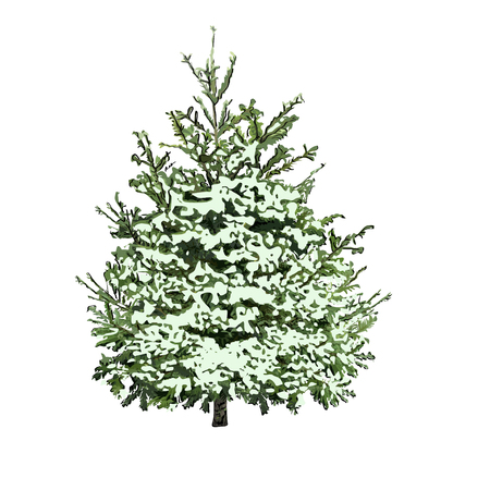 Fir-tree with green needles under snow cover, the color vector image on a white background
