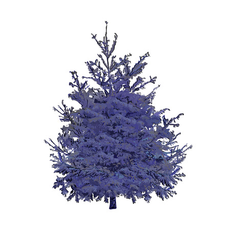 Blue spruce, the color vector image on a white background Çizim