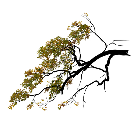 Oak branch with foliage, in the fall, the color vector image on a white background