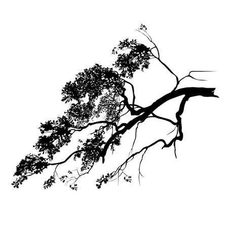 Silhouette of an oak branch with foliage, the black vector image on a white background