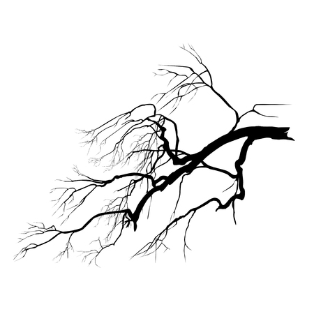 Silhouette of an oak branch without foliage, the black vector image on a white background