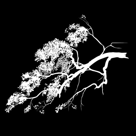 Silhouette of an oak branch with foliage, the white vector image on a black background Çizim