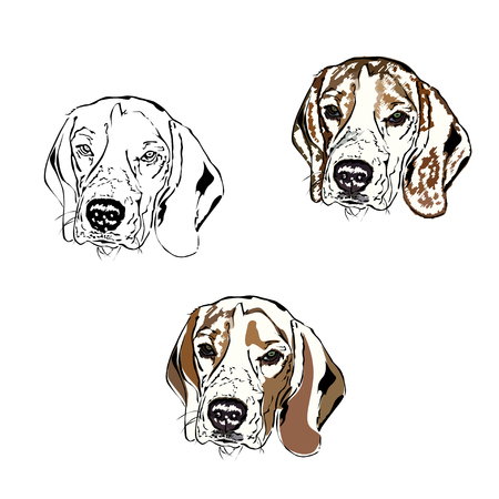 The head of a thoroughbred dog (beagle) in the terkh options, a color and black-and-white illustration on a white background Çizim