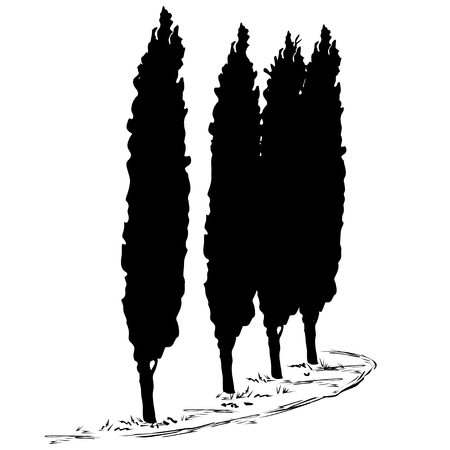 Four silhouettes of a tree of a cypress (Cupressus L.) and a footpath along them, the black vector image on a white background Illustration