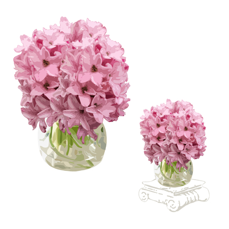Two images of a flower of a hyacinth (Hyacinthus L.) in a vase, the color vector image on a white background Çizim