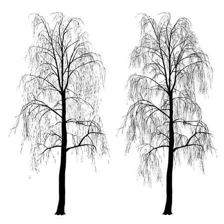 Two silhouettes of a birch (Betula L.) without foliage, winter, the black vector image on a white background