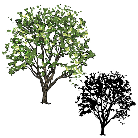 Big tree of an elm with leaves in the summer, the vector image color (technology of paint daubs) and a silhouette on a white background