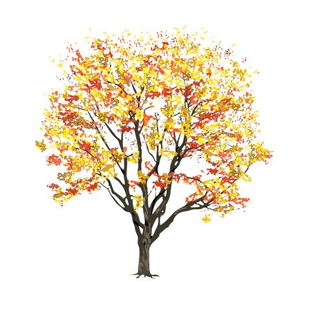 Tree with foliage in the fall, the color vector image on a white background