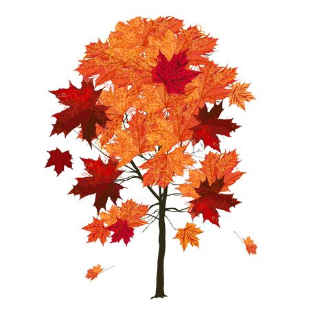Wood, maple (Acer platanoides L.), large red leaves in autumn, colored vector image on white background