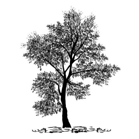 Olive, maslin (Olea europaea L.), silhouette of a separate tree, black vector image on a white background
