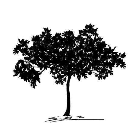 Silhouette de jeune arbre figuier (Ficus carica L.) avec feuille, image vectorielle noir sur fond blanc