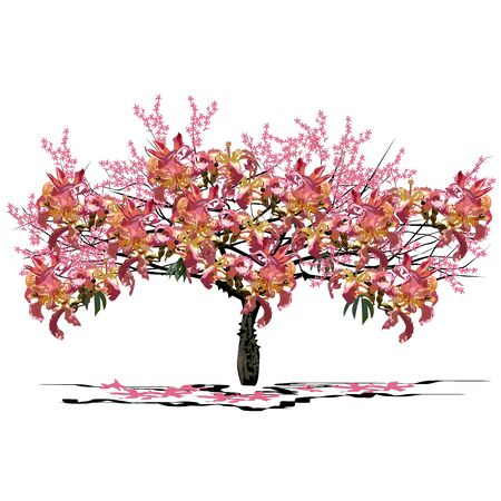 Young tree Seiba (Ceiba Miller L.), with flowers, colored vector image on white background