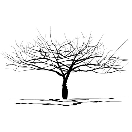 Silhouette young tree Seiba (Ceiba Miller L.), no foliage, black vector image on white background