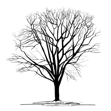 Silhouette of a chestnut (Castanea L.) tree with fallen leaves, black vector image on a white background Çizim