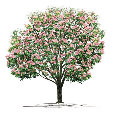 Flowering chestnut (Castanea L.) tree with pink colors, colored vector image on white background Çizim