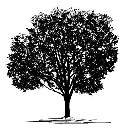 Silhouette of a chestnut (Castanea L.) tree with dense foliage, black vector image on a white background Çizim