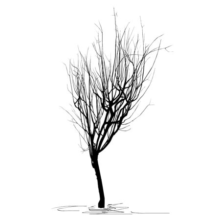 Silhouette of the young tree quince ordinary (Cydonia oblonga L.), in winter, with fallen foliage, a black vector image on a white background Çizim