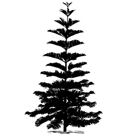 Silhouette evergreen coniferous araucaria diverse (Araucaria heterophylla L., Norfolk pine, Norfolk Island pine, Polynesian pine), black vector image on white background