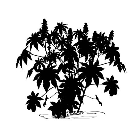 Silhouette of castor-bean tree (Ricinus communis L.) with large flowers, black vector image on white background