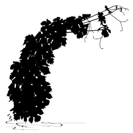 Silhouette of young grapevine, black vector image on white background