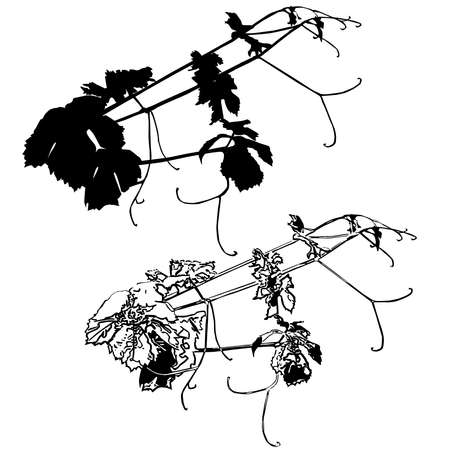 Two fragments of the grapevine, silhouettes, lower - in the style of Stamp, black vector image on a white background