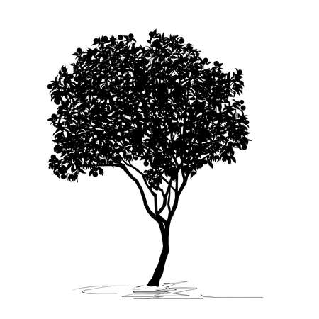 Silhouette of young tangerine tree (Citrus reticulata L.), Chinese New Year, black vector image on white background Çizim