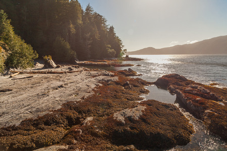shore: Canadian shore