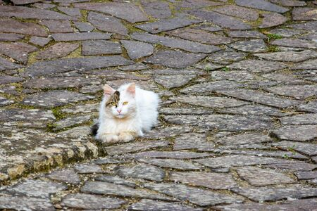 A white cat with a black spot on its face on the pavement of a typical Italian street