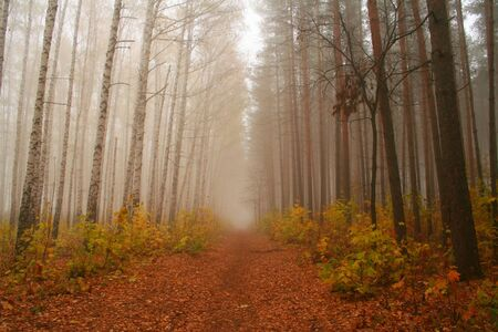 exhalation: The park in autumn.