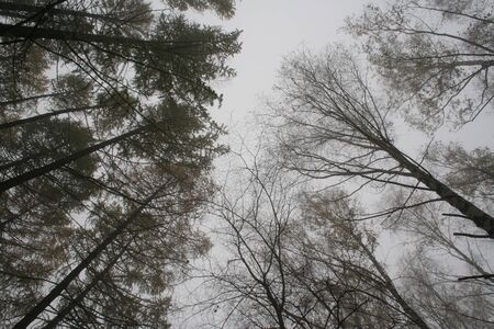 exhalation: The view of sky in park.