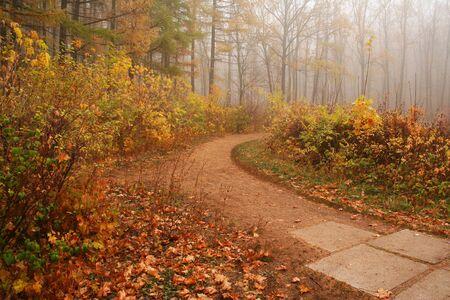 The Autumn road photo