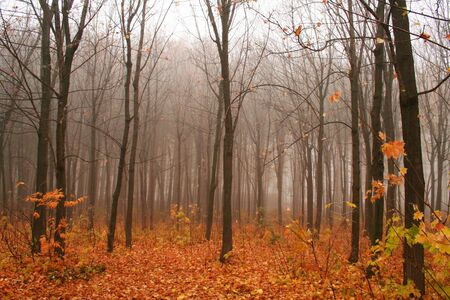 The autumn park. photo