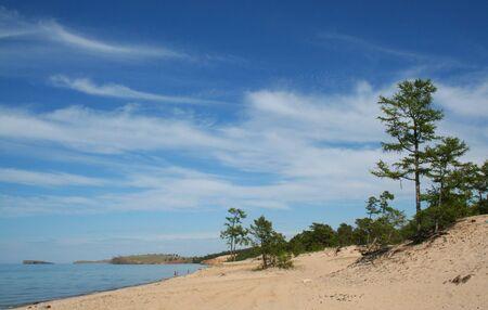 explicitly: The pine tree on the beach of Baikal. The Sarayskiy Bay.