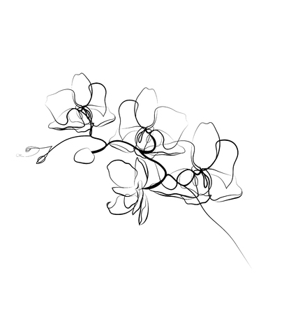 One line drawing orchid sketch.Modern single line art, aesthetic contour. Perfect for home decor such as posters, wall art, tote bag, t-shirt print, sticker
