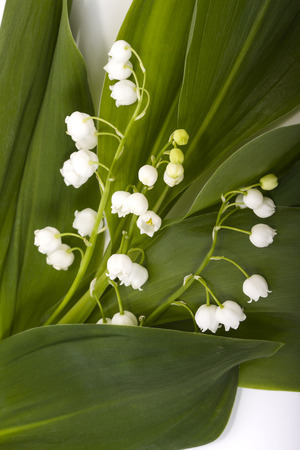 Lily of the valley drops on white background Stock Photo