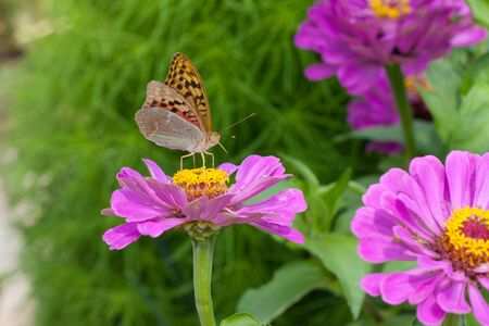 beautiful butterfly sitting on a flower in spring garden photo